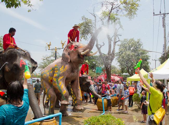 Сонгкран и слон