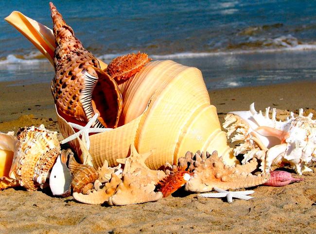Раковины и кораллы запрещены к вывозу
