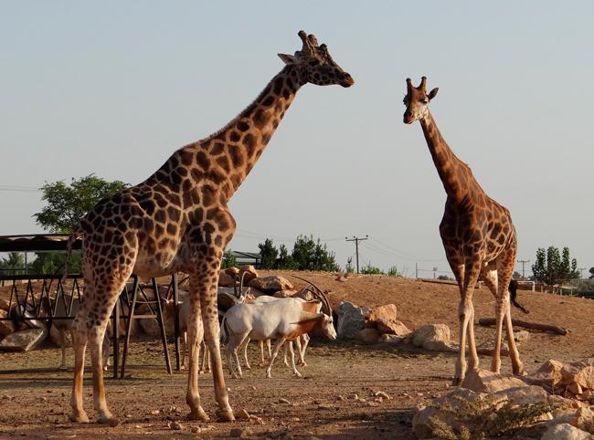 Зоопарк «Аттика»