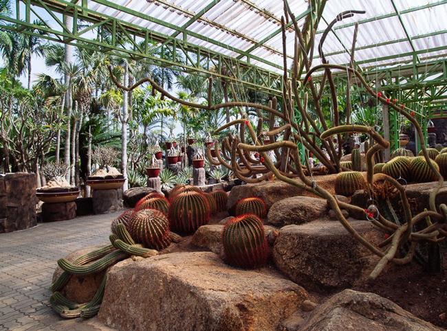 nong-nooch-tropical-garden24