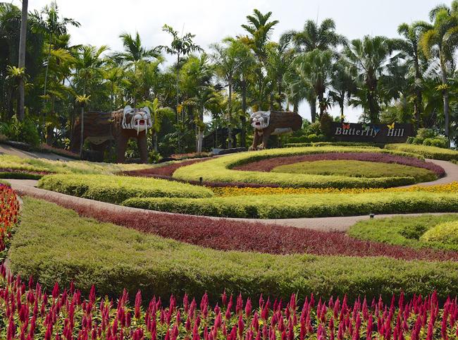 nong-nooch-tropical-botanical-garden-butterfly-hill